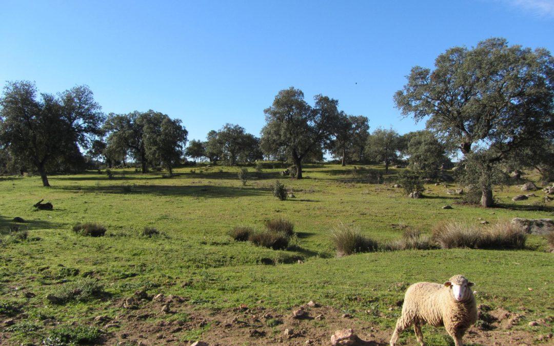 Ruta Dehesa Quebradillas ya incluída en el Proyecto Paisajes con Historia 1
